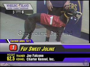 picture of greyhound FGF Sweet Joline
