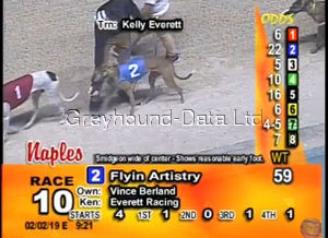 picture of greyhound Flyin Artistry