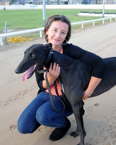 picture of the greyhound Wise Thought