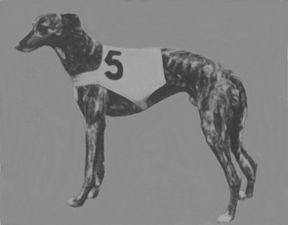 picture of greyhound Ballyhennessy Seal