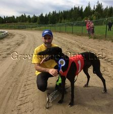 picture of greyhound Vancouver May