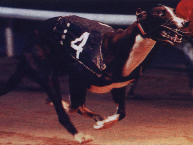 picture of the greyhound Droopys Vieri