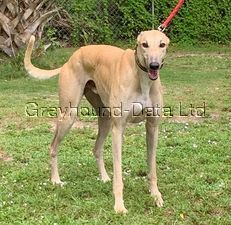 picture of greyhound VJ One To Know