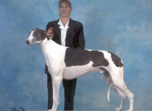 picture of greyhound GrandCru Lafite