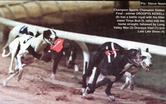 picture of the greyhound Droopys Kewell