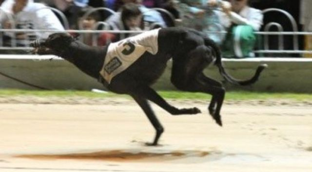 picture of the greyhound Corporate Attack