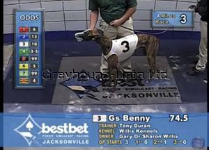 picture of greyhound GS Benny